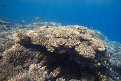 Chumbe Island 7 zanzibar chumbe island21