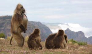 Ethiopie 1 ethiopie faune ethiopienne1
