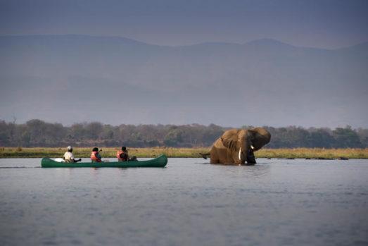 Nyamatusi Camp 17 zimbabwe african bush camps nyamatusi camp17