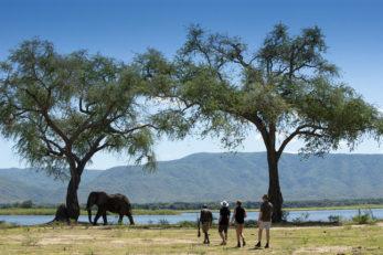 Nyamatusi Camp 8 zimbabwe african bush camps nyamatusi camp8