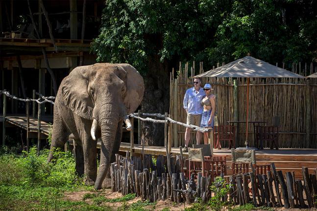 Nyamatusi Camp 9 zimbabwe african bush camps nyamatusi camp9