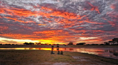 Somalisa Camp 5 zimbabwe african bush camps somalisa camp5