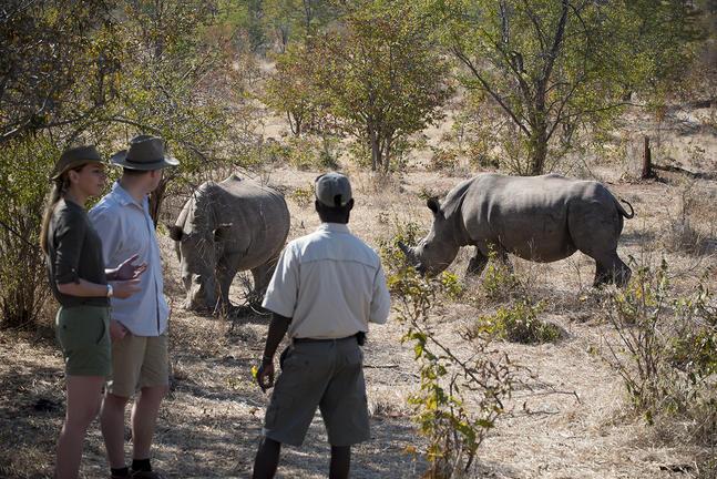 Thorntree River Lodge 19 zimbabwe african bush camps thorntree river lodge19