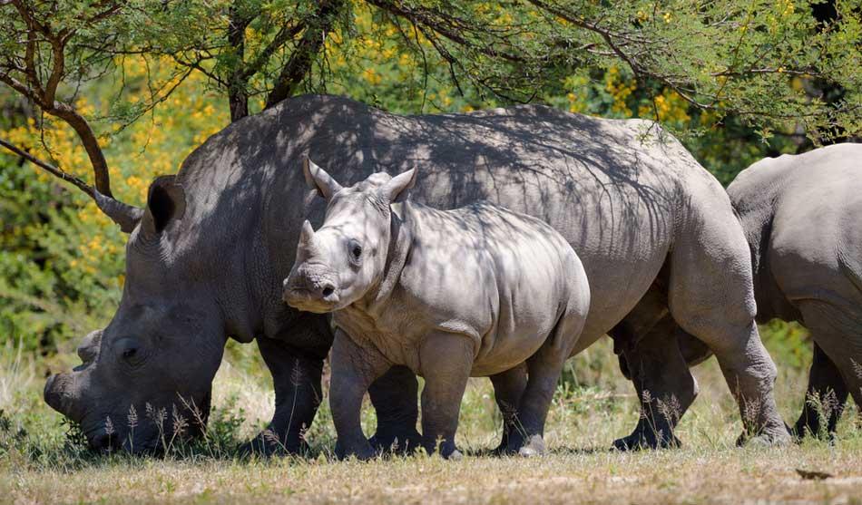 Zimbabwe 4 zimbabwe au volant1 1