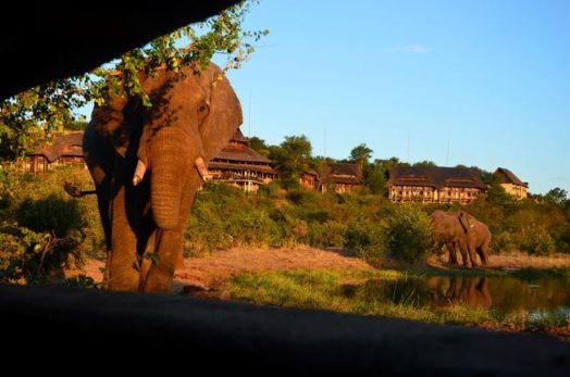 Victoria Falls Safari Lodge 10 zimbabwe victoria falls safari lodge10