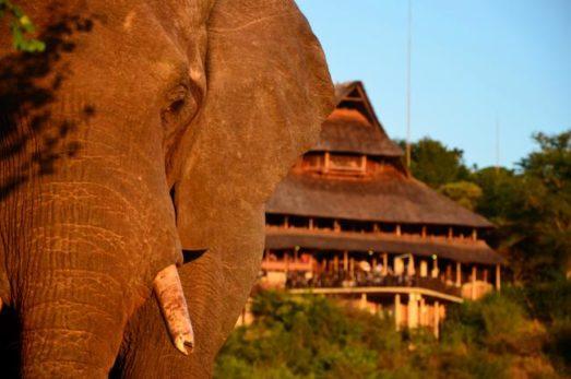 Victoria Falls Safari Lodge 11 zimbabwe victoria falls safari lodge11