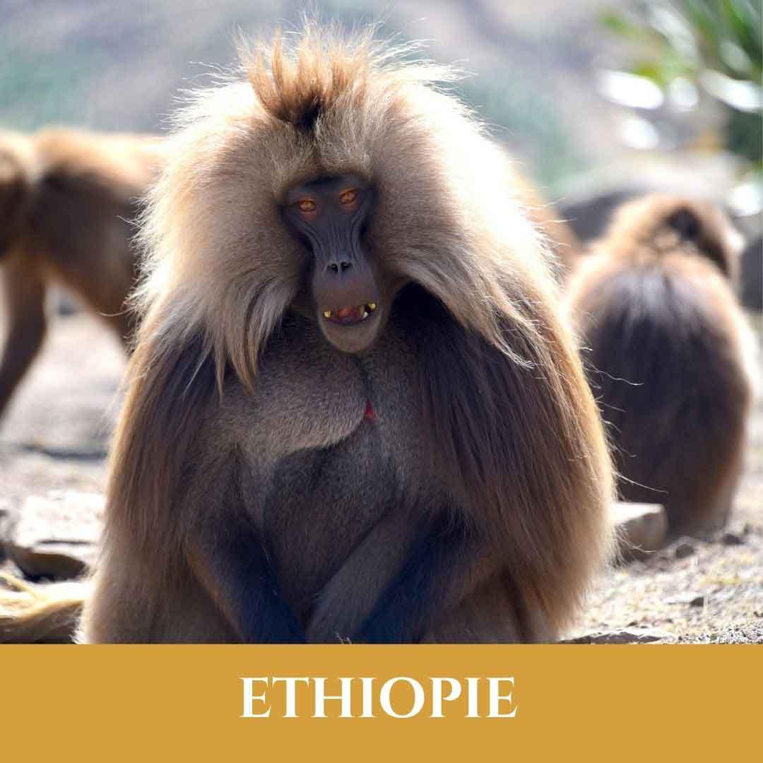 Ethiopie 4 Vignette Ethiopie