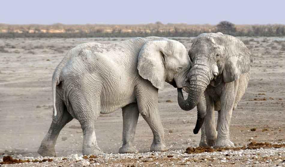 Namibie 4 namibie elephants du desert1