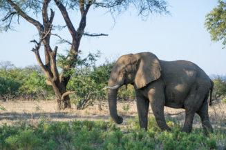 Anabezi Camp 11 Elephant