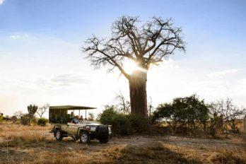 Ila Safari Lodge 10 zambie ila safari lodge10