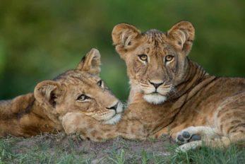 Ila Safari Lodge 12 zambie ila safari lodge11