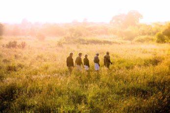 Ila Safari Lodge 8 zambie ila safari lodge9