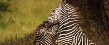 Kaingu Safari Lodge 2 zambie kaingu safari lodge8