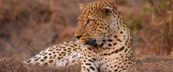 Kaingu Safari Lodge 6 zambie kaingu safari lodge9